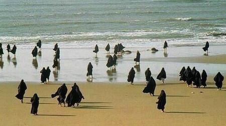 a la plage pingouins