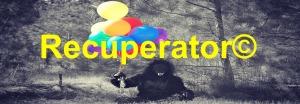 gorilla-504638_960_720 - copie