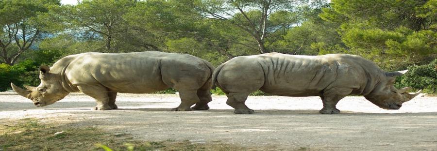 rhinoceros-782278_960_720