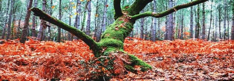arbre-partir