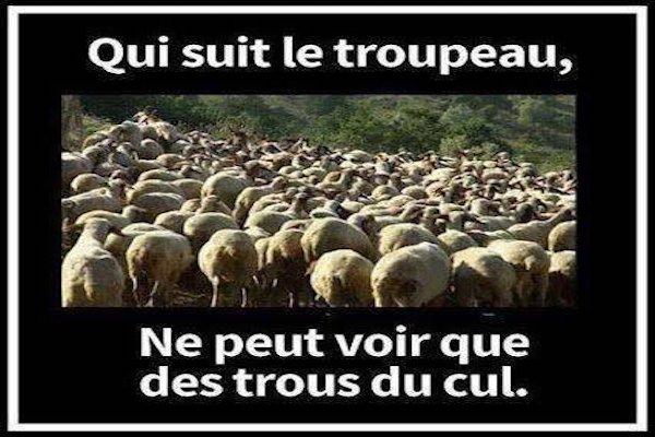 troupeau
